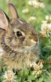 konijn binnen of buiten