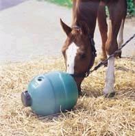 paardenmelkerij