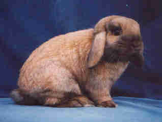 welk konijn fotos