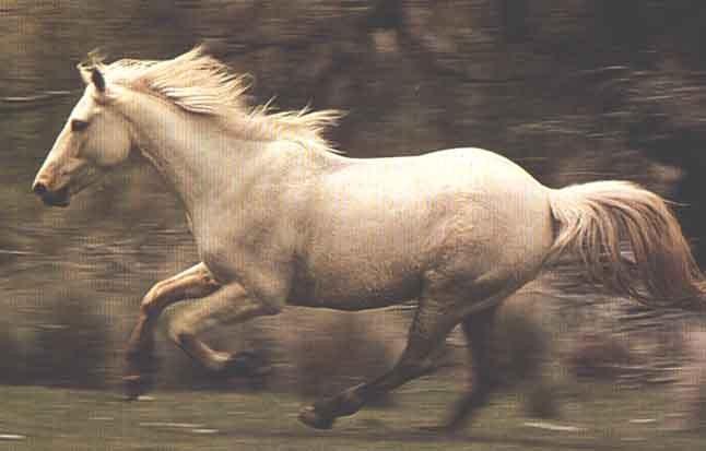 lastdieren paard