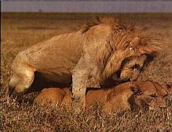 paring leeuwen
