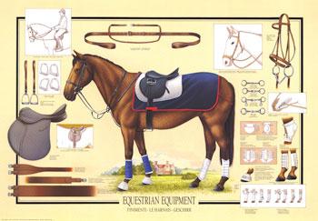 paarden spullen