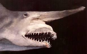 haaien die zein tanden
