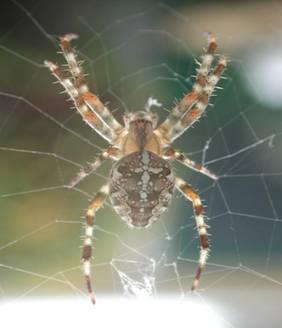 lichaam spin