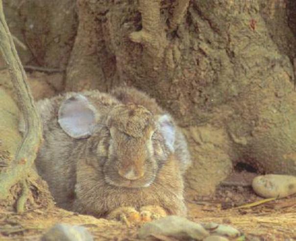 konijnen kleur
