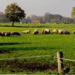 Varkensboerderijen