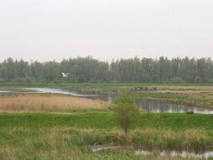 795px-Biesbosch_wetlands