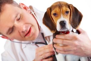 dierenarts-met-hond