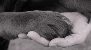 dierenmishandeling2