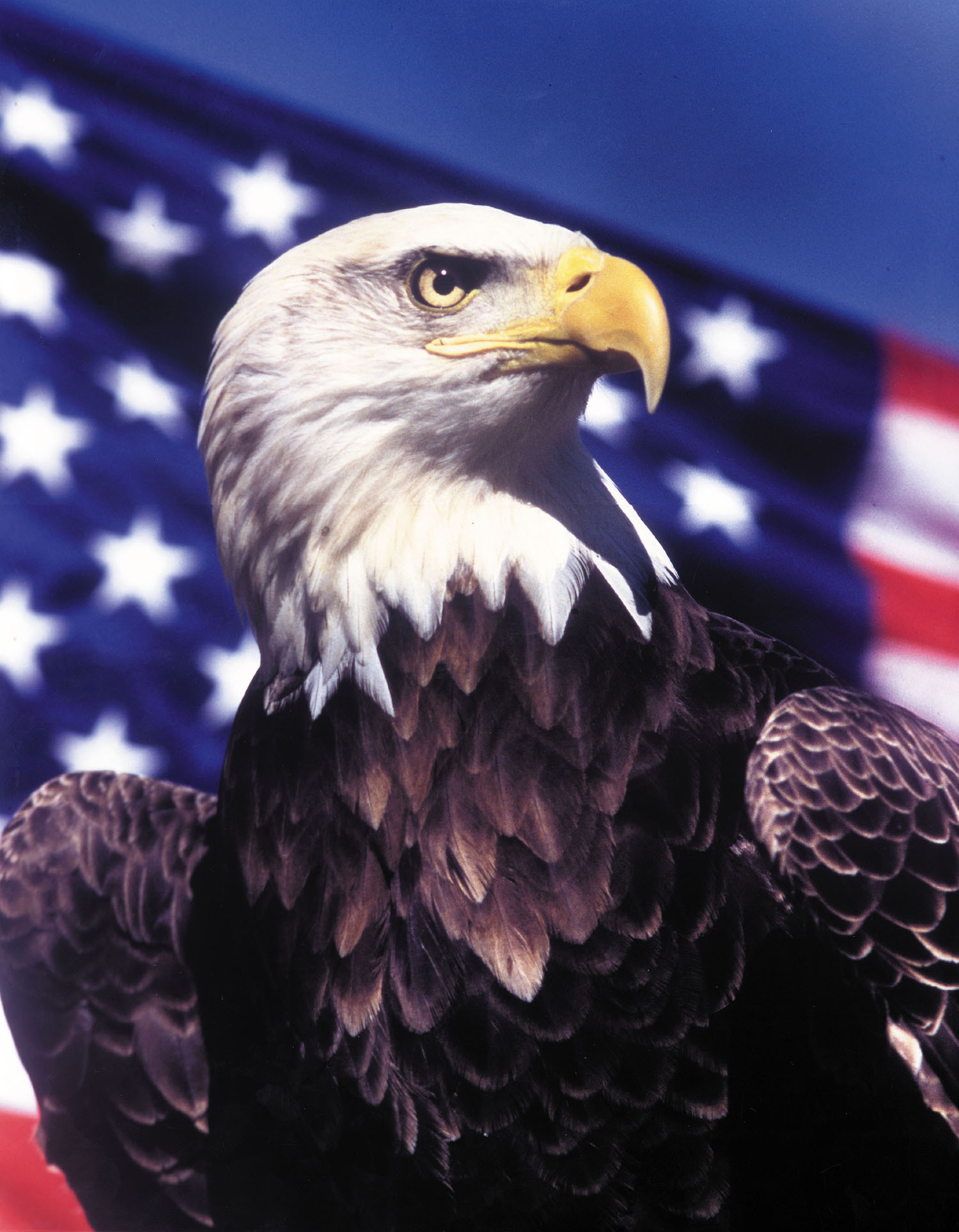 logo amerika zeearend